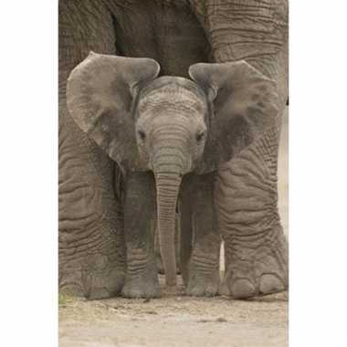 Poster baby olifant speelgoed